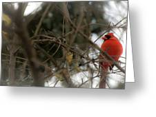 Red Cardinal II Greeting Card