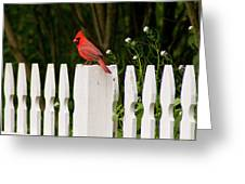 Red Cardinal--white Fence Greeting Card