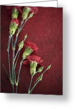 Red Carnation Stems Greeting Card