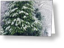 Red Cedar And Snow Greeting Card