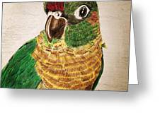 Green Cheeked Conure Greeting Card