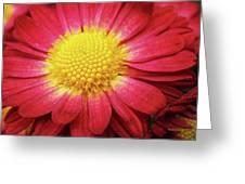 Red Chrysanthemum Greeting Card