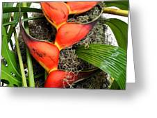 Red Claws Greeting Card