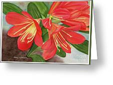 Red Clivias - Watercolor Greeting Card