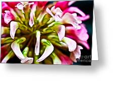 Red Clover Flower Greeting Card by Ryan Kelly