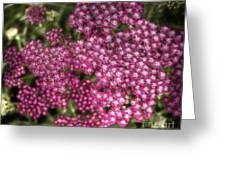 Red Cluster Greeting Card