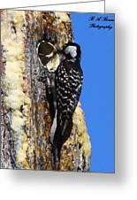 Red Cockaded Woodpecker Mother Feeding Greeting Card