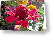 Red Cone Flower Greeting Card