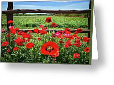 Red Corn Poppies At The Fence Greeting Card
