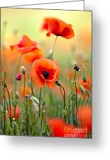Red Corn Poppy Flowers 06 Greeting Card