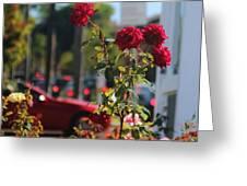 Red Coronado Roses Greeting Card