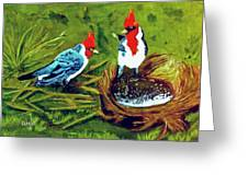 Red-crested Cardinal Birds #77 Greeting Card