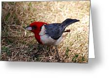 Red Crusted Cardinal Greeting Card