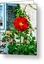 Red Dahlia By Window Greeting Card