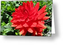 Red Dahlia In The Green Greeting Card