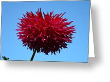 Red Dahlia Purple Dahlia Flower Art Prints Baslee Troutman Greeting Card