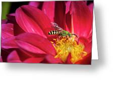 Red Dahlia With Wasp Greeting Card