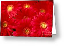 Red Daisies Greeting Card