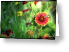 Red Daisy  Greeting Card
