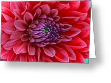 Red Dalia Up Close Greeting Card