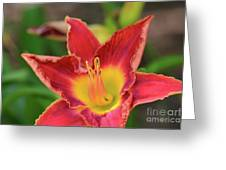 Red Daylily Greeting Card
