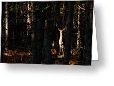 Red Deer In The Woods Greeting Card