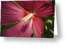Red Disco Belle Hibiscus Painting Greeting Card