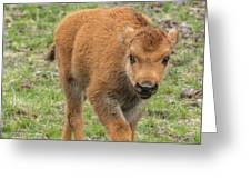 Red Dog Bison In Yellowstone Greeting Card