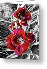 Red Double Lily Greeting Card