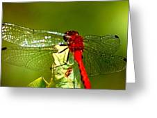 Red Dragon 2 Greeting Card