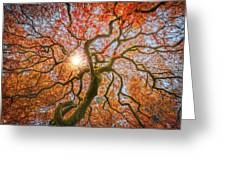 Red Dragon Japanese Maple In Autumn Colors Greeting Card
