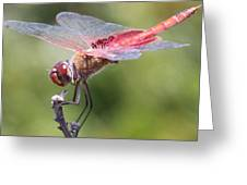 Red Dragonfly 1 Greeting Card