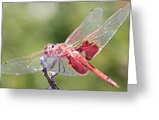 Red Dragonfly 5 Greeting Card