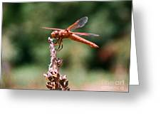 Red Dragonfly II Greeting Card