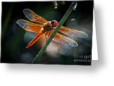 Red Dragonfly On Reed Greeting Card