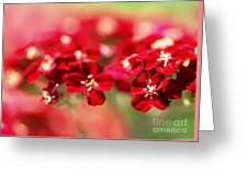 Red Dreams Greeting Card