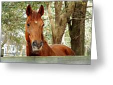 Red Ears Up Greeting Card