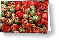 Red Elegant Blooming Tulips  Greeting Card