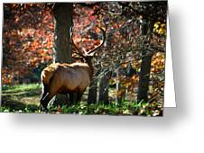 Red Elk Greeting Card