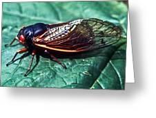 Red Eyed Cicada Greeting Card
