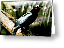 Red Eyed Crow Greeting Card
