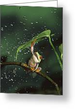 Red-eyed Tree Frog In The Rain Greeting Card