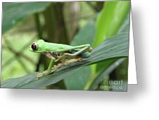 Red Eyed Tree Frog On A Leaf Greeting Card