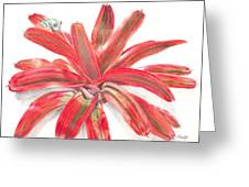 Red-eyed Tree Frog On Bromeliad Greeting Card by Penrith Goff