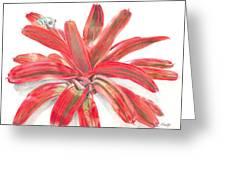 Red-eyed Tree Frog On Bromeliad Greeting Card