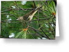 Red Eyed Vireo Greeting Card