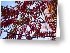 Red Fall Colors Greeting Card
