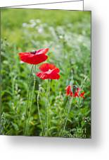Red Field Poppies Greeting Card