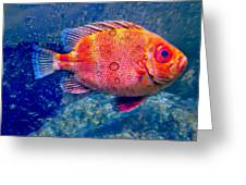 Red Fish Blue Fish Greeting Card