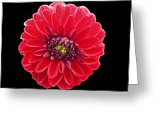 Red Fleur Greeting Card